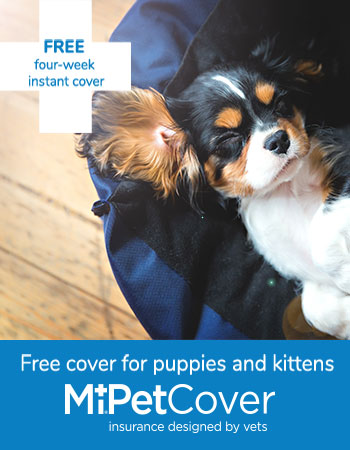 Mi Pet Cover four weeks free for puppies and kittens advert