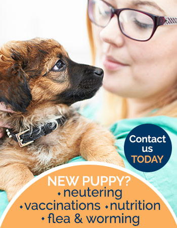 New puppy services, neutering, vaccinations, nutrition advert