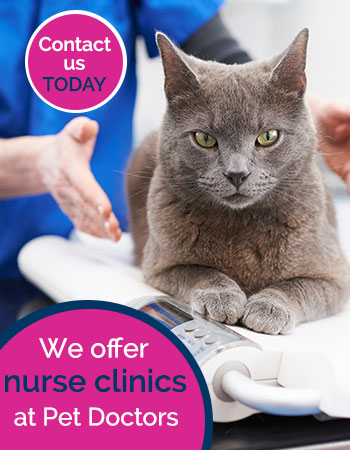 Nurse clinics available at Pet Doctors advert