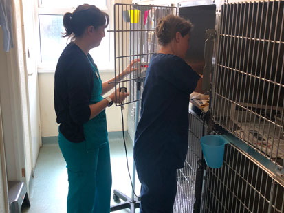 Pet Doctors Tongham kennels