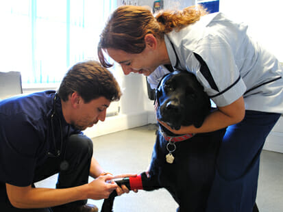 Vet and nurse vaccinating a dog