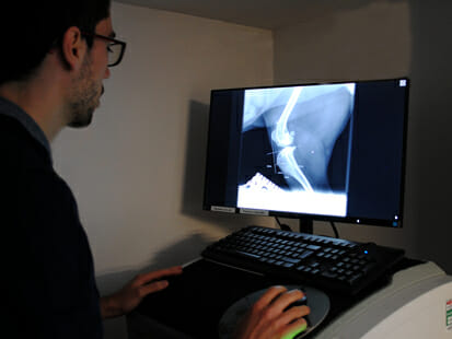 Vet reviewing an X-ray