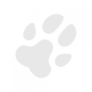 avatar paw
